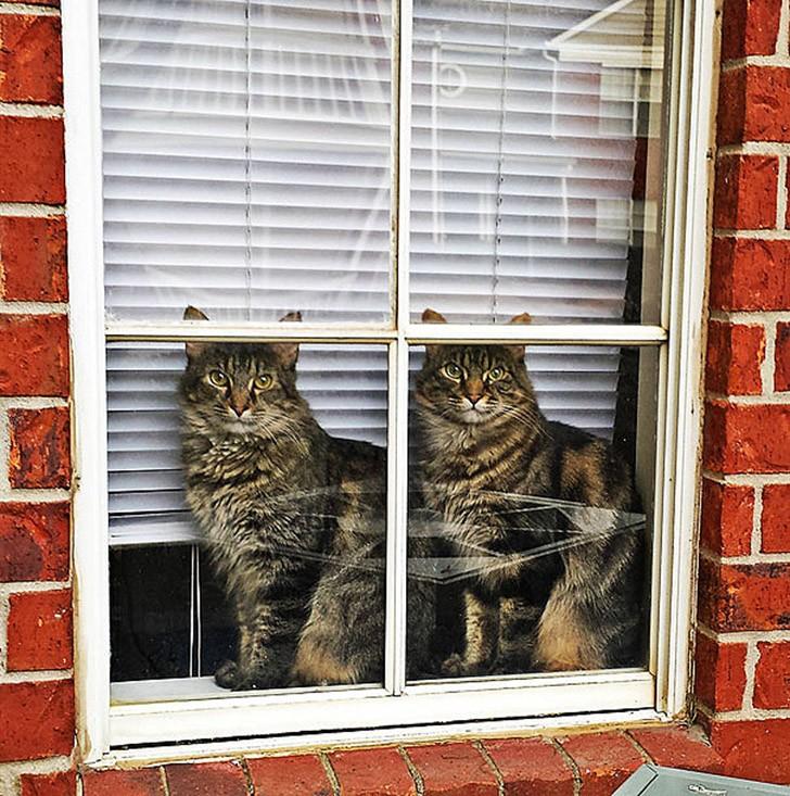 AnimalTwins01 25 животных близнецов, которые не оставят вас равнодушными