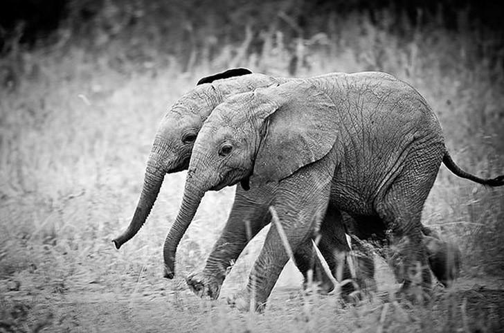 AnimalTwins03 25 животных близнецов, которые не оставят вас равнодушными