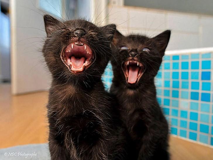 AnimalTwins04 25 животных близнецов, которые не оставят вас равнодушными