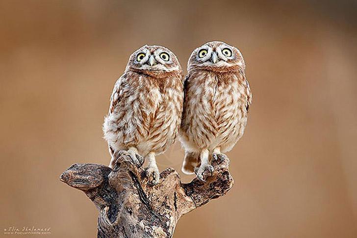 AnimalTwins05 25 животных близнецов, которые не оставят вас равнодушными