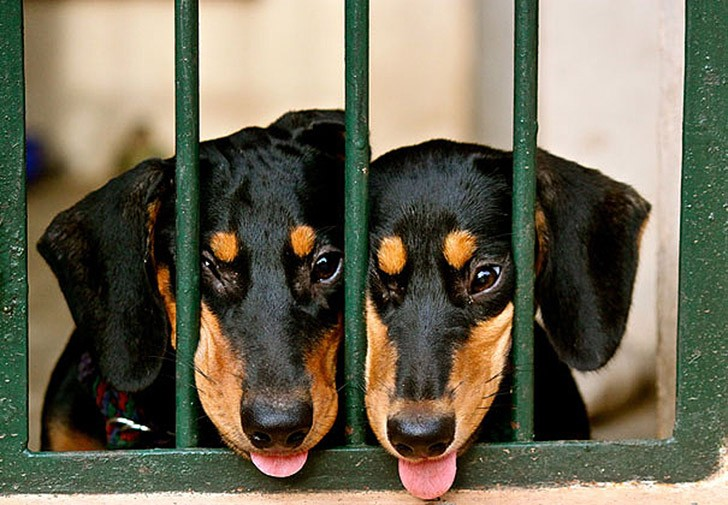 AnimalTwins06 25 животных близнецов, которые не оставят вас равнодушными