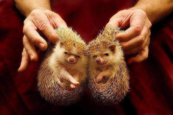 AnimalTwins08 25 животных близнецов, которые не оставят вас равнодушными