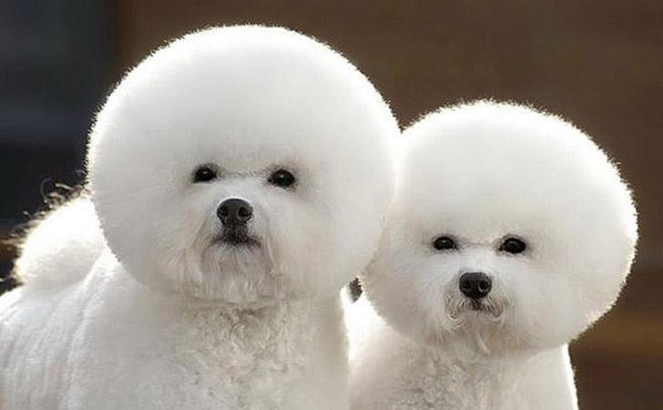 AnimalTwins09 25 животных близнецов, которые не оставят вас равнодушными
