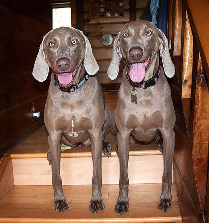 AnimalTwins11 25 животных близнецов, которые не оставят вас равнодушными