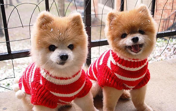 AnimalTwins13 25 животных близнецов, которые не оставят вас равнодушными