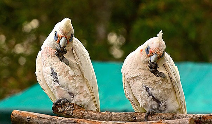AnimalTwins14 25 животных близнецов, которые не оставят вас равнодушными
