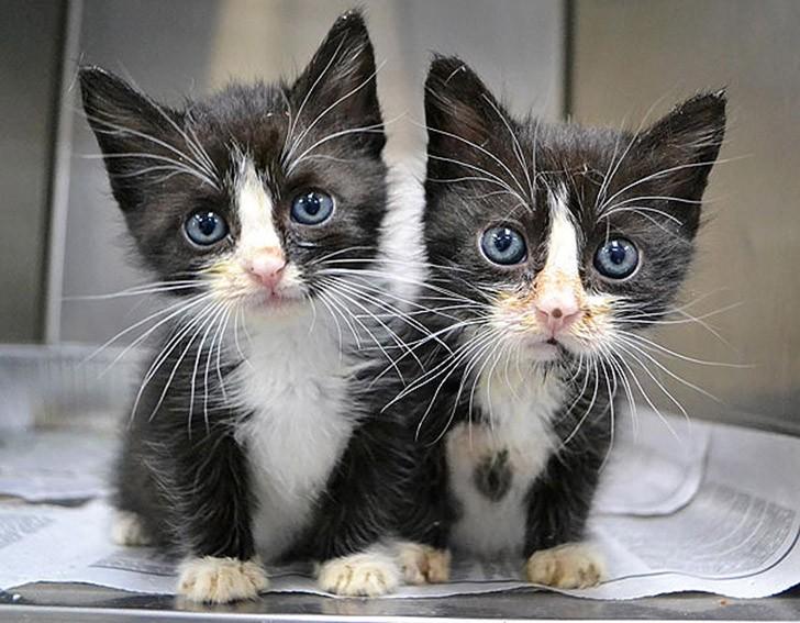 AnimalTwins16 25 животных близнецов, которые не оставят вас равнодушными