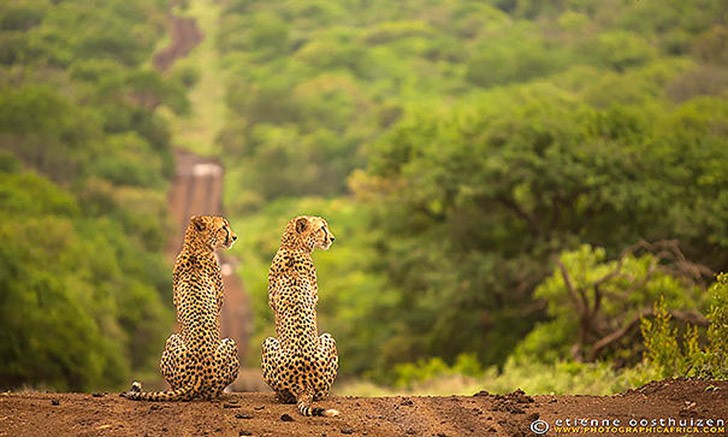 AnimalTwins21 25 животных близнецов, которые не оставят вас равнодушными