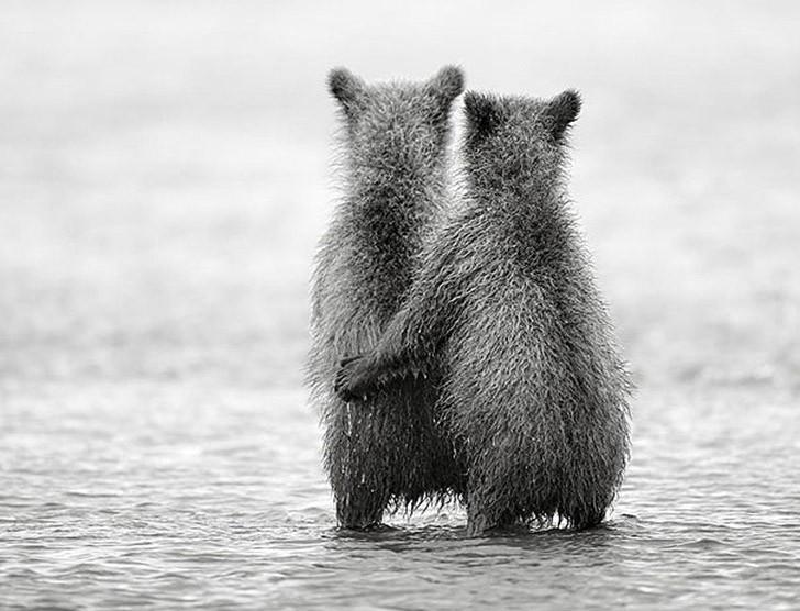 AnimalTwins23 25 животных близнецов, которые не оставят вас равнодушными
