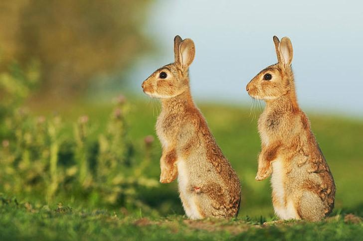 AnimalTwins24 25 животных близнецов, которые не оставят вас равнодушными