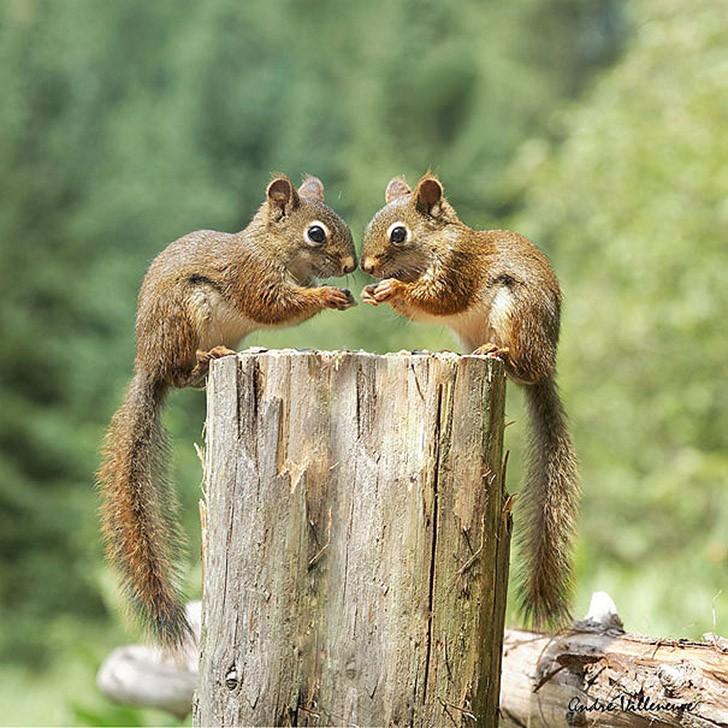 AnimalTwins25 25 животных близнецов, которые не оставят вас равнодушными