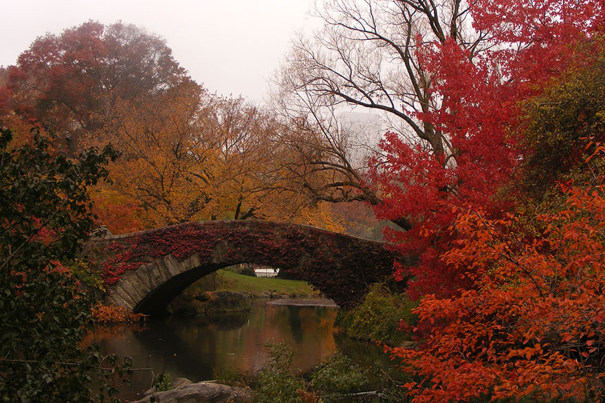 AutumnTransformation04 Чудесная дюжина удивительно красивых осенних превращений