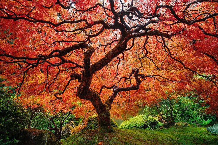 AutumnTransformation06 Чудесная дюжина удивительно красивых осенних превращений