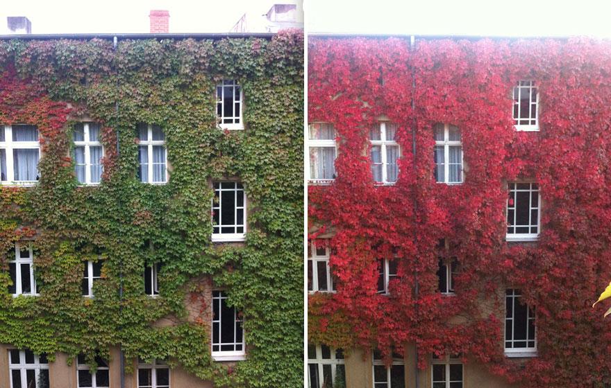 AutumnTransformation07 Чудесная дюжина удивительно красивых осенних превращений