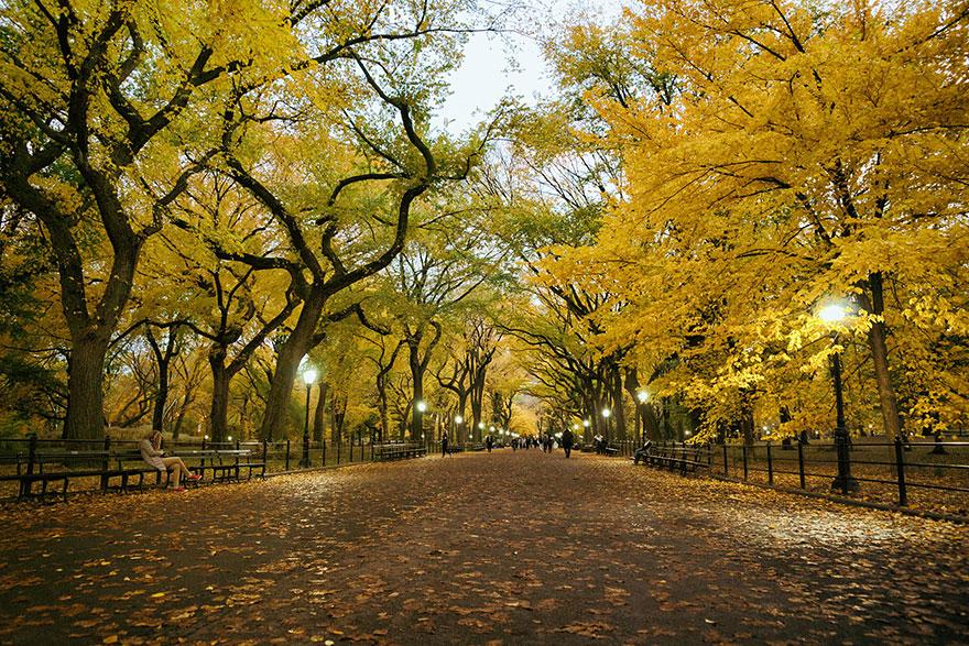AutumnTransformation11 Чудесная дюжина удивительно красивых осенних превращений