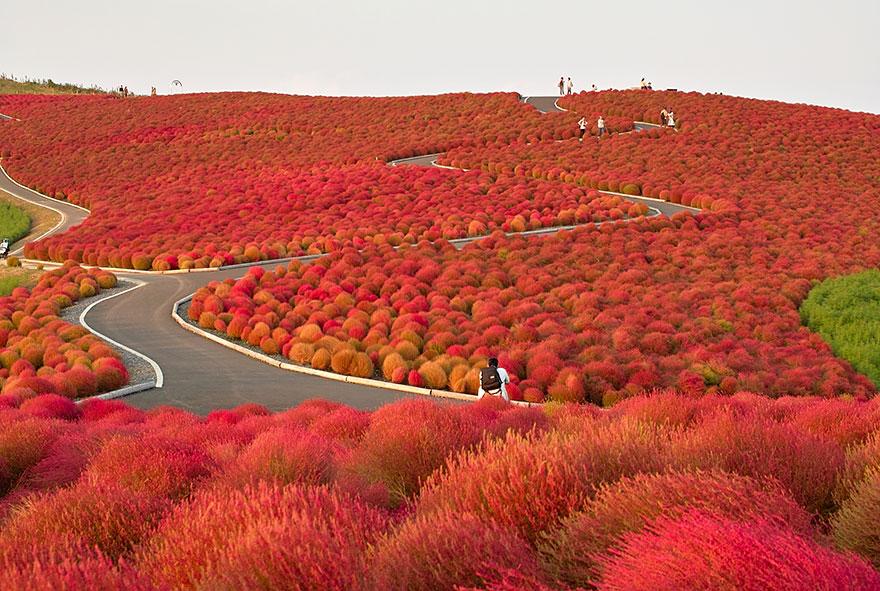 AutumnTransformation13 Чудесная дюжина удивительно красивых осенних превращений