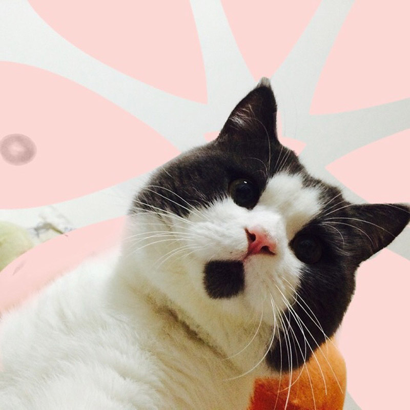 Banye01 Удивлённый кот Банья, которого поражает всё вокруг