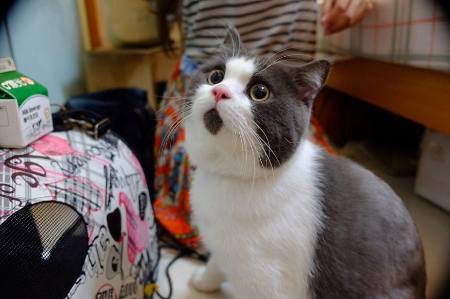 Banye06 Удивлённый кот Банья, которого поражает всё вокруг