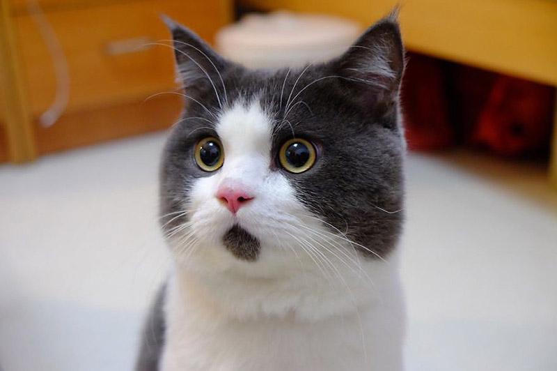 Banye07 Удивлённый кот Банья, которого поражает всё вокруг