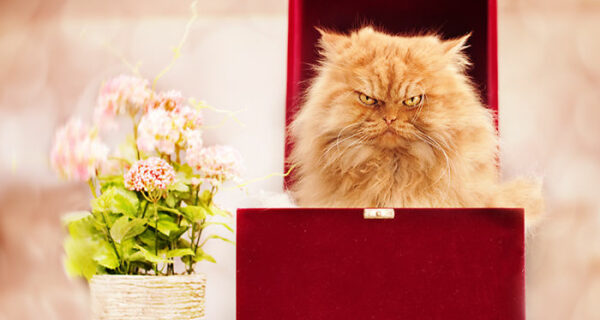 Гарфи, самый сердитый кот вмире