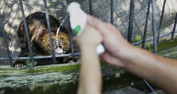 Ужасы зоопарков со всегомира