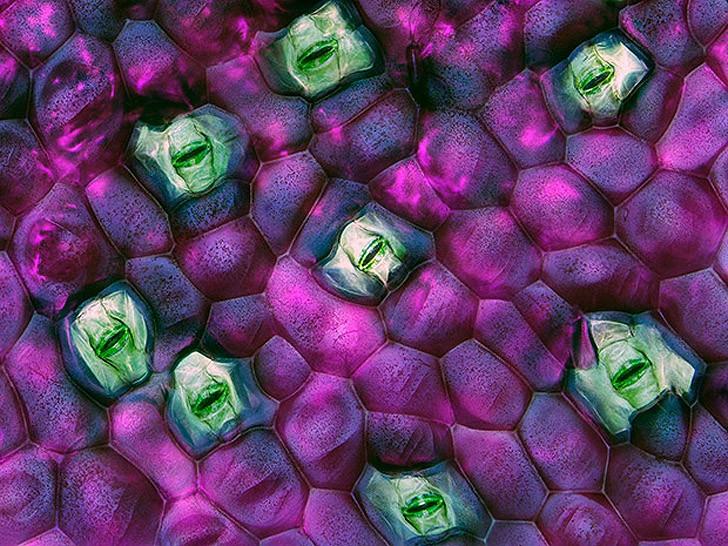 Nikonsmallworld05 Снимки через микроскоп- такие большие маленькие вещи
