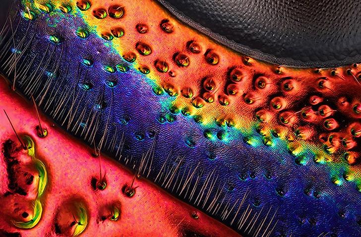 Nikonsmallworld06 Снимки через микроскоп- такие большие маленькие вещи