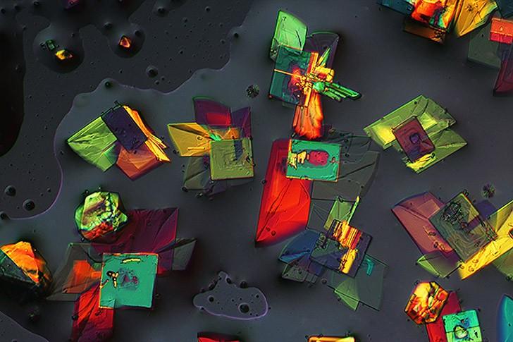 Nikonsmallworld09 Снимки через микроскоп- такие большие маленькие вещи