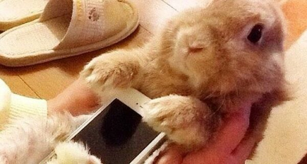 Мем: Кролик-чехол