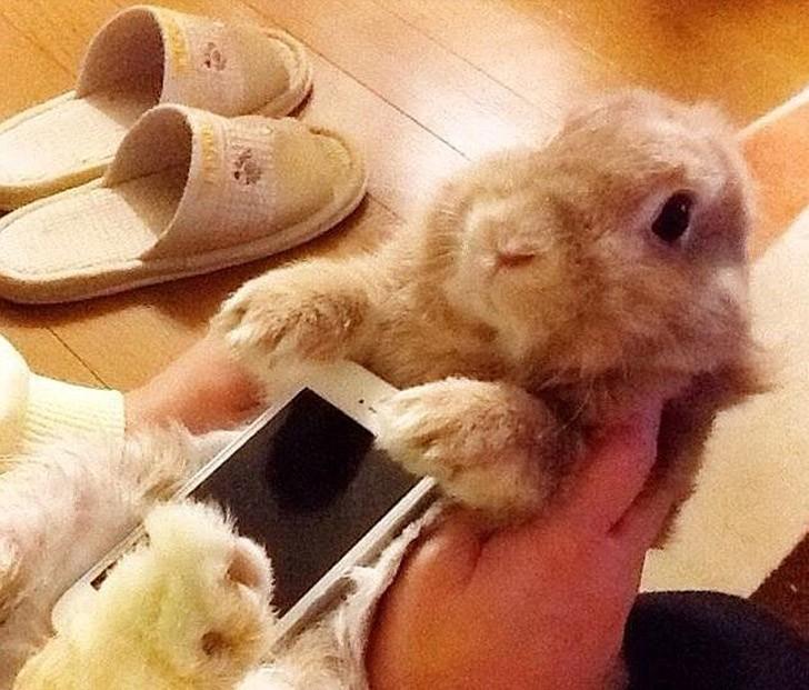 bunnywrote02 Мем: Кролик чехол