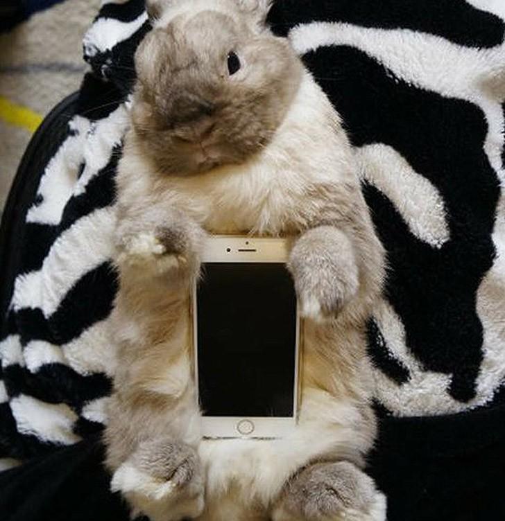 bunnywrote04 Мем: Кролик чехол