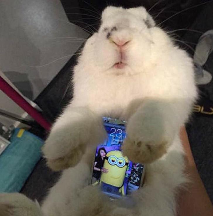 bunnywrote06 Мем: Кролик чехол