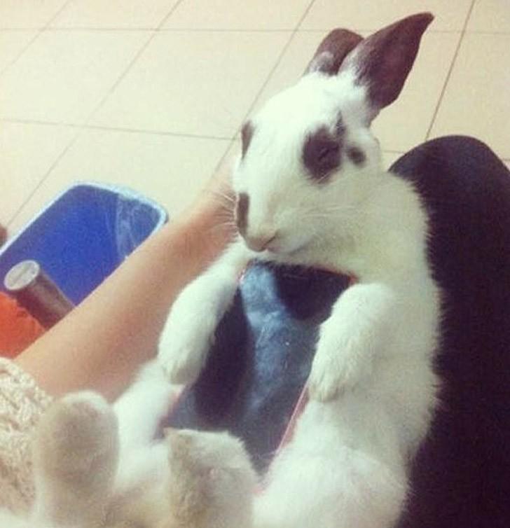 bunnywrote08 Мем: Кролик чехол