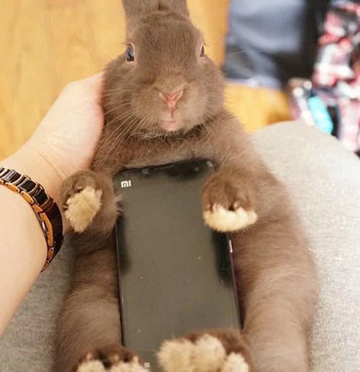 bunnywrote10 Мем: Кролик чехол