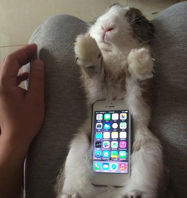 bunnywrote12 Мем: Кролик чехол