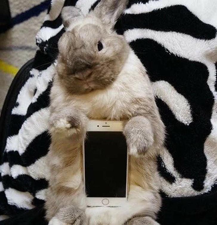 bunnywrote14 Мем: Кролик чехол