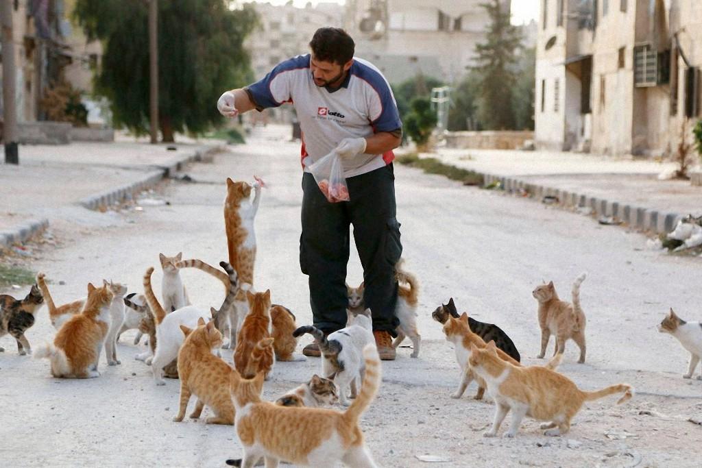 catsaviour01 Водитель из Сирии спасает брошенных кошек