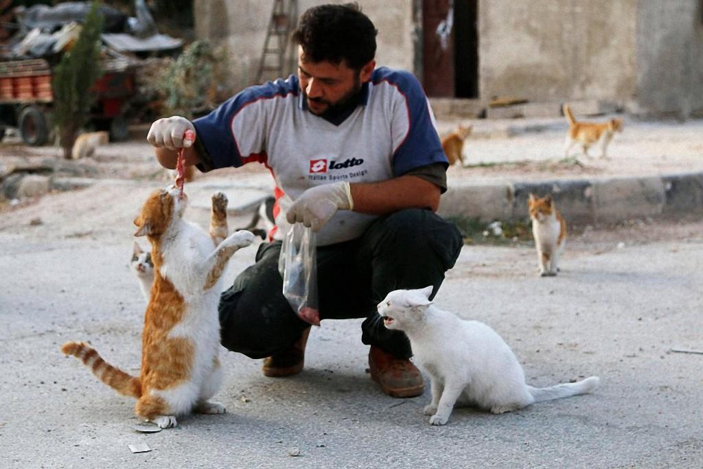 catsaviour02 Водитель из Сирии спасает брошенных кошек