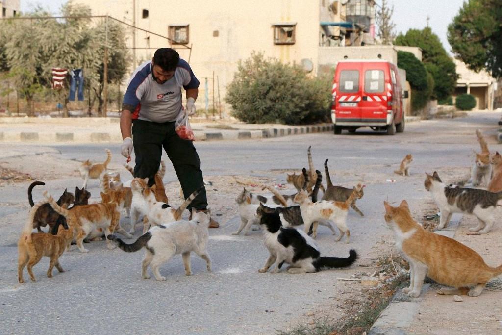 catsaviour04 Водитель из Сирии спасает брошенных кошек