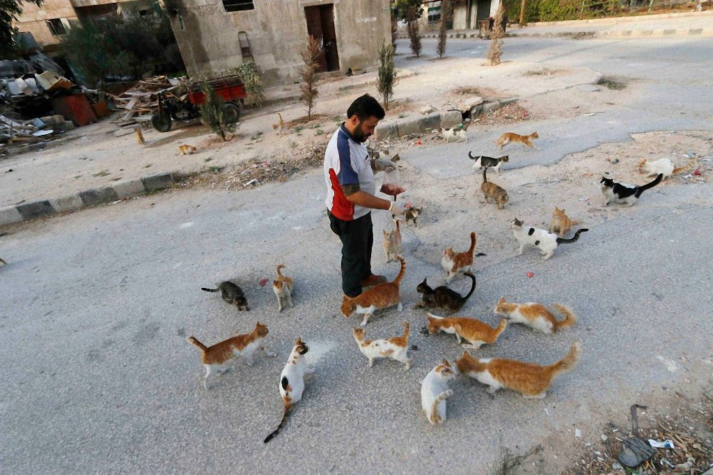 catsaviour06 Водитель из Сирии спасает брошенных кошек