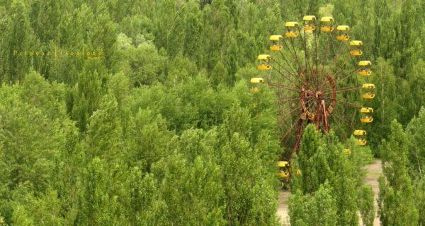 Оживающий Чернобыль