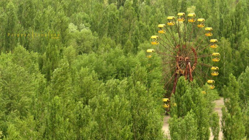 chnpp18 800x450 Оживающий Чернобыль