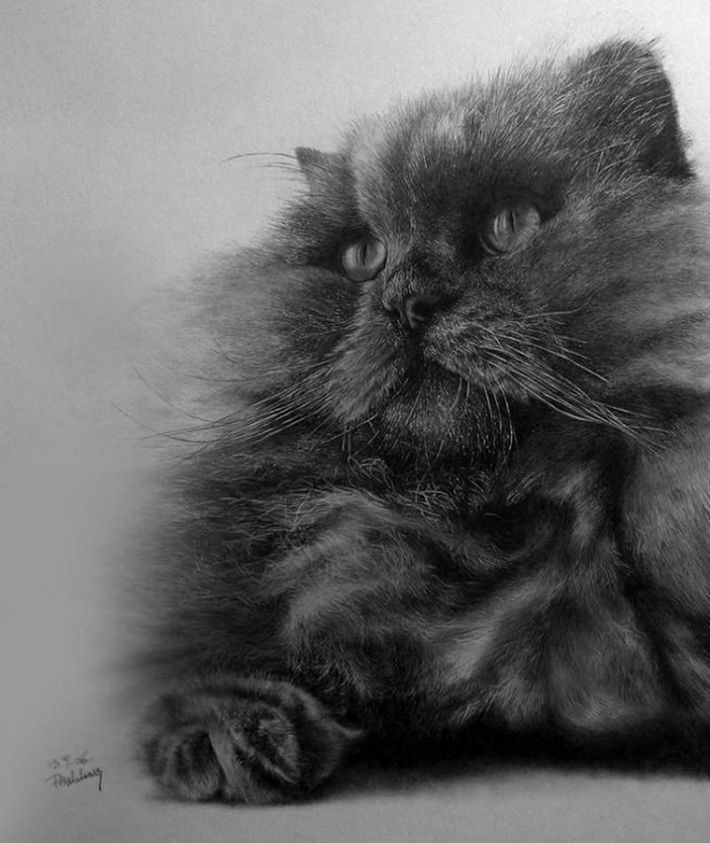 drawncats02