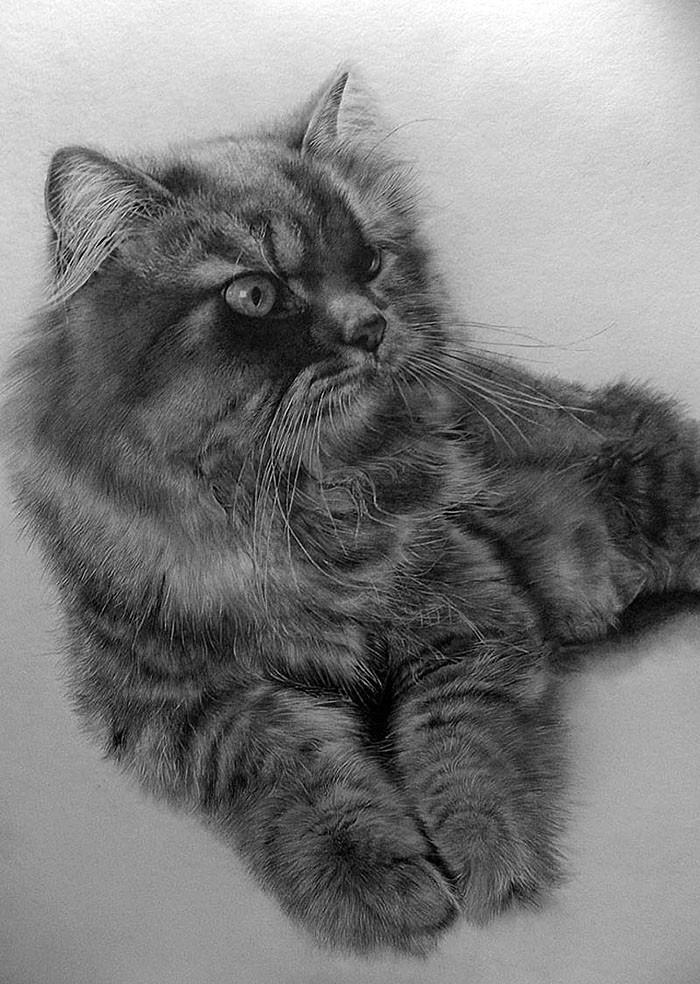 drawncats04 Мастер карандашного наброска — Пол Ланг