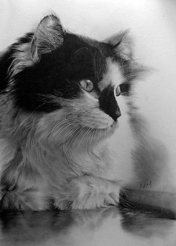 drawncats07 Мастер карандашного наброска — Пол Ланг