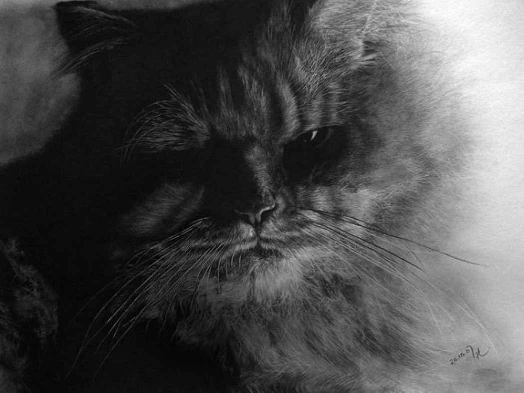 drawncats09 Мастер карандашного наброска — Пол Ланг