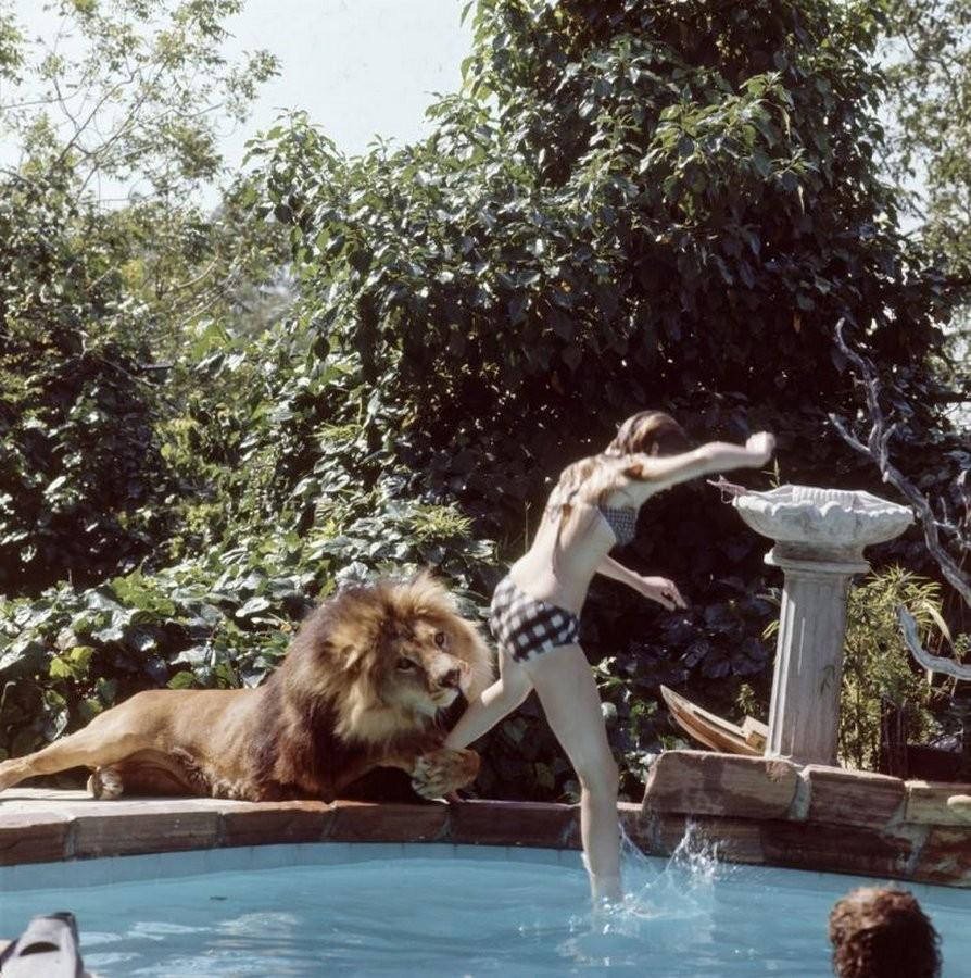 griffitnNeal03 Невероятные фотографии из 70 х: Мелани Гриффит и лев Нил