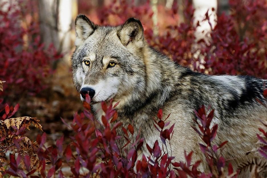 killinganimals02 Животные, которые нас убивают