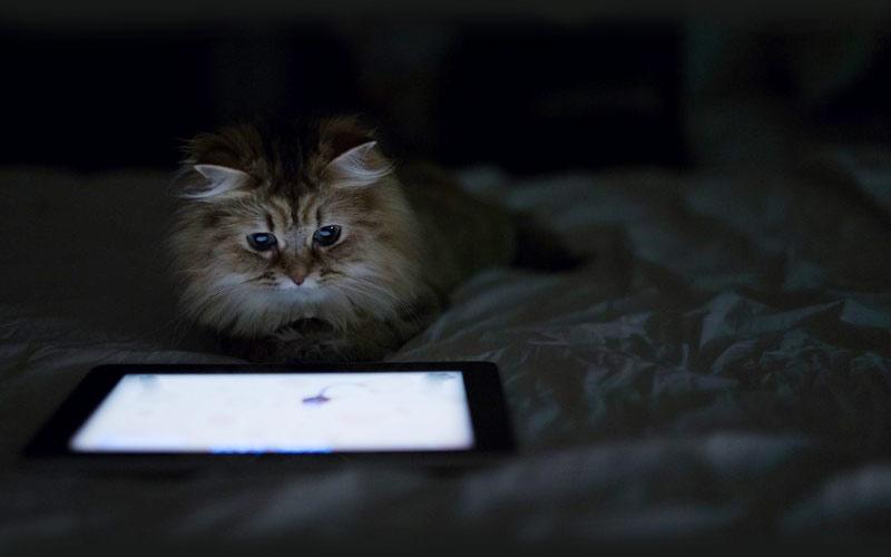 kitties02 30 способов использования котов в хозяйстве