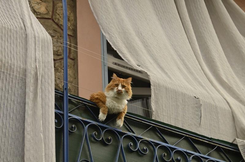 kitties05 30 способов использования котов в хозяйстве